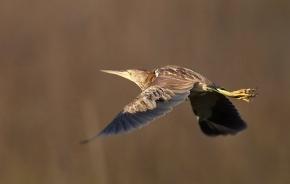 Vtáky/Birds