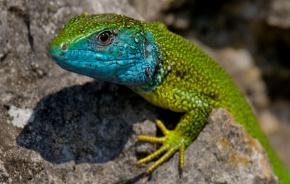 Plazy/Reptiles